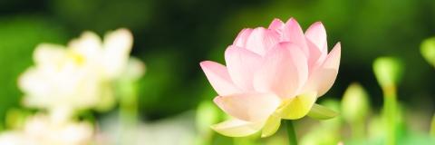 仏壇・仏具コラム